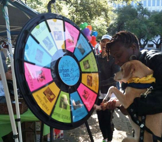 dog spins prize wheel